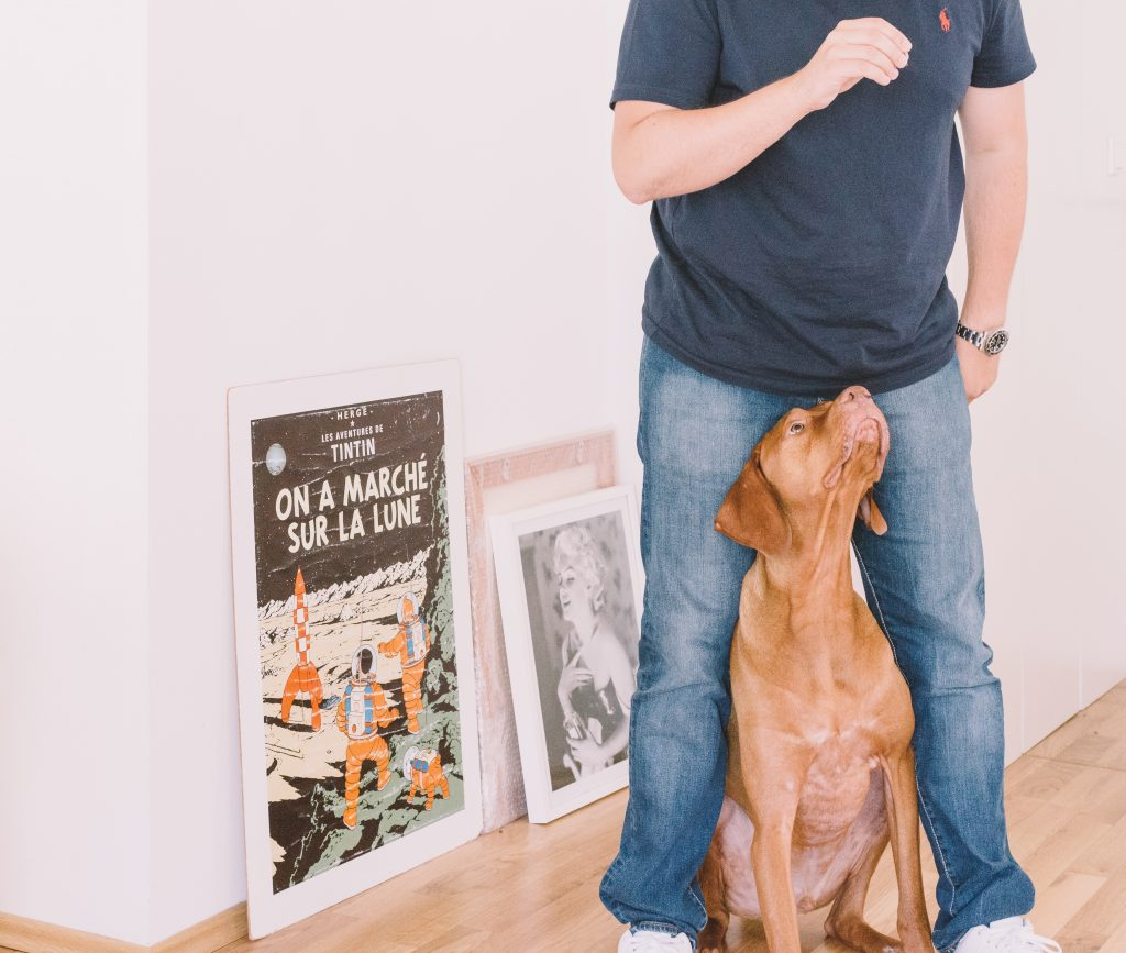 Dog looking up at man while standing in between his legs, with old movie posters behind them