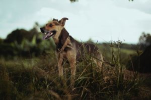 The 6 best dog parks in Toronto