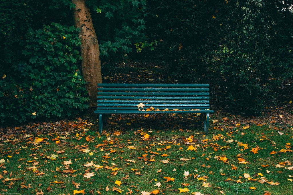 park bench during fall with leaves on ground